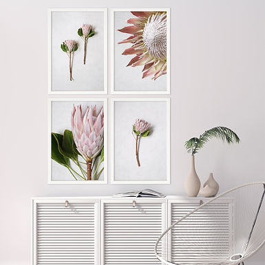 Blush Pink King Protea Wall Art Print Set | Collection 3