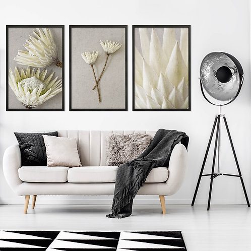 White King Protea Wall Art Print Set   Collection 3