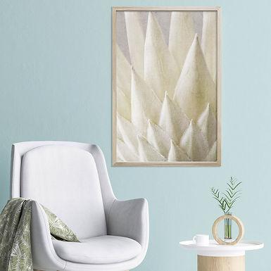 White King Protea Wall Art   Single Print 2