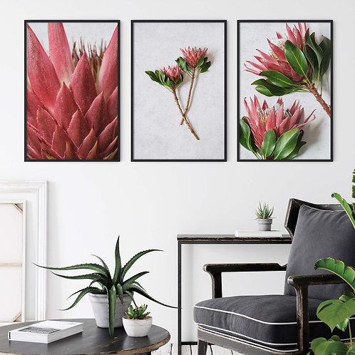 red king protea wall art print, protea home decor