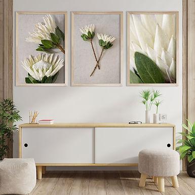 White King Protea Wall Art Print Set | Collection 1