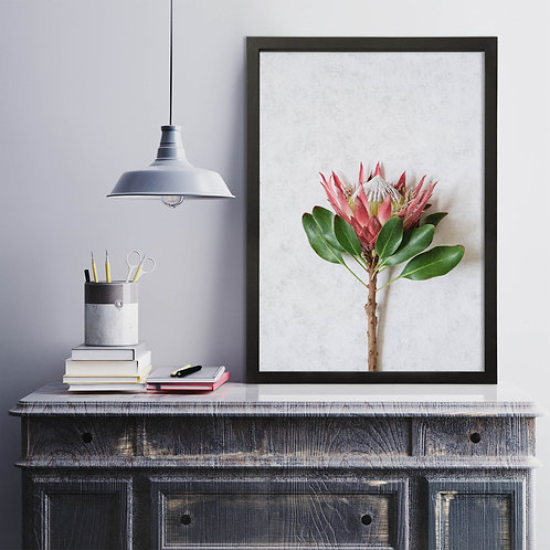 Red King Protea Wall Art | Single Print 8