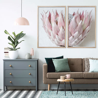Blush Pink King Protea Wall Art Print Set | Collection 5