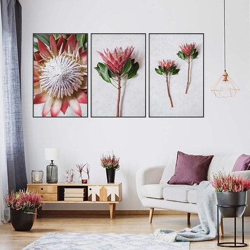 madiba red king protea wall art