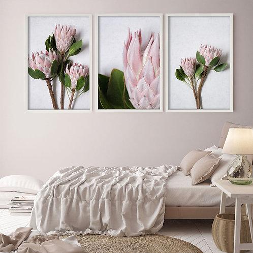 Blush Pink King Protea Wall Art Print Set | Collection 1