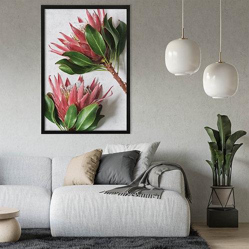 Red King Protea Wall Art | Single Print 4