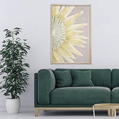 White King Protea Wall Art   Single Print 5