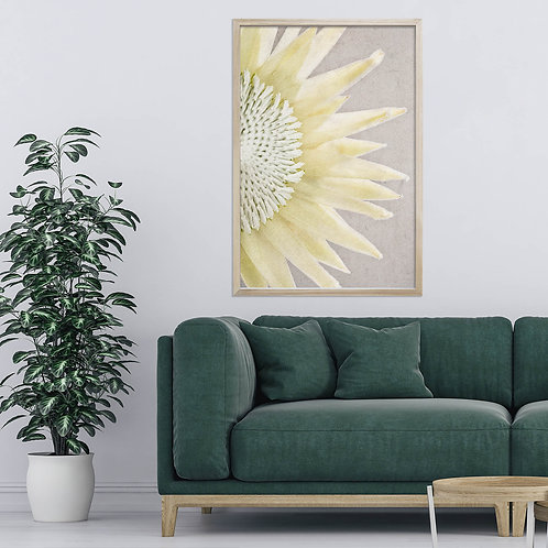 White King Protea Wall Art | Single Print 5
