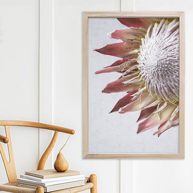 Blush Pink King Protea Wall Art   Single Print 2