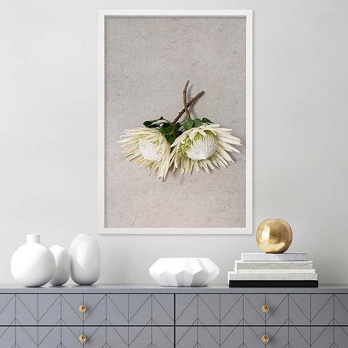 White King Protea Wall Art   Single Print 12