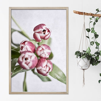 Pink Tulips Wall Art   Single Print 6