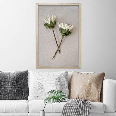 White King Protea Wall Art   Single Print 8