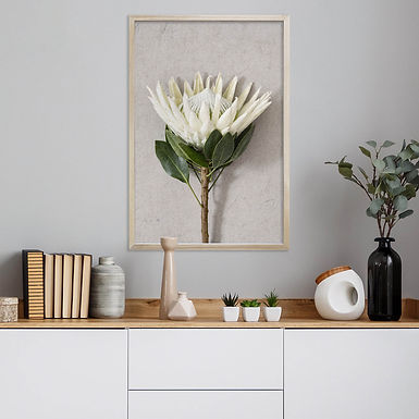 White King Protea Wall Art | Single Print 4