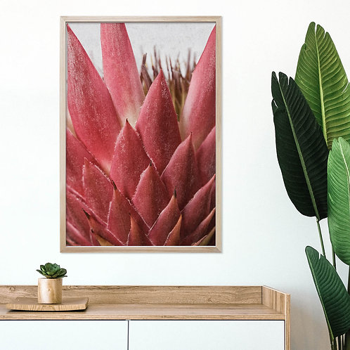 Red King Protea Wall Art | Single Print 11