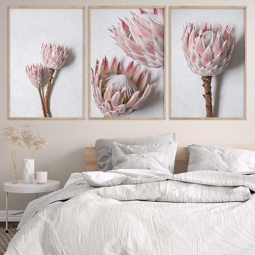 blush pink king protea wall art photography print set home decor