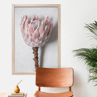 Blush Pink King Protea Wall Art   Single Print 11