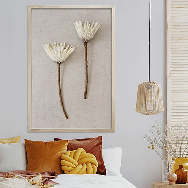White King Protea Wall Art   Single Print 13