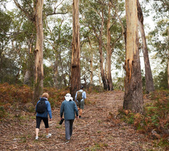pack fre walking tasmania, freycinet guided walk, tasmania tours, freycinet retreat guide walk, see tasmania