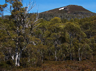 Mount Field walking tours, tarn shelf walking track, hobart tours, hiking tours tasmania, hikes from hobart, tasmania, walkin trips from hobart, 2 day walks tasmania, 2 day tours, 2 days walking.