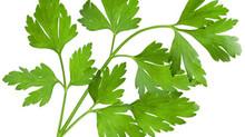 Secrets d'herboristerie: Le persil