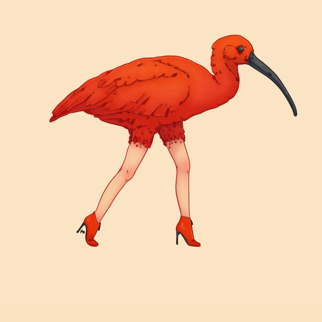 IBIS_ROUGE_FINITION.tif