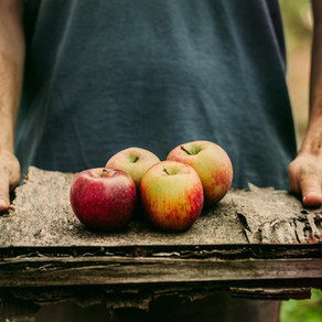 An Apple A Day!