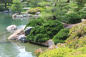 Carissa. Dark green, fragrant white flowering shrub with a mounding habit.