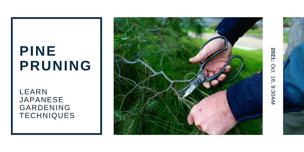 Pine Pruning