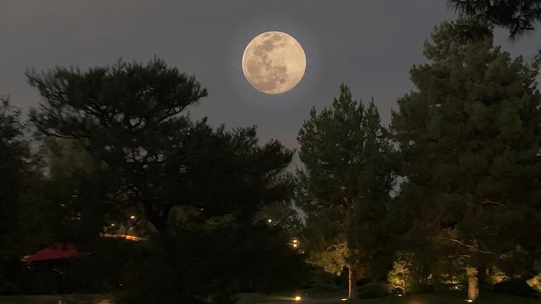 Moon Meditation in the Garden