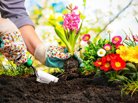 It's Spring! What are you planting?