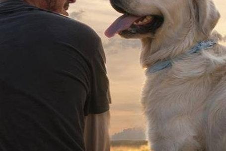 Corso Il Cane: ri-conoscere un amico