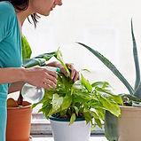 Cura delle piante da interno.jpg