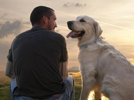 Corso Il Cane: riconoscere un amico