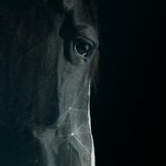 Black Technology horse