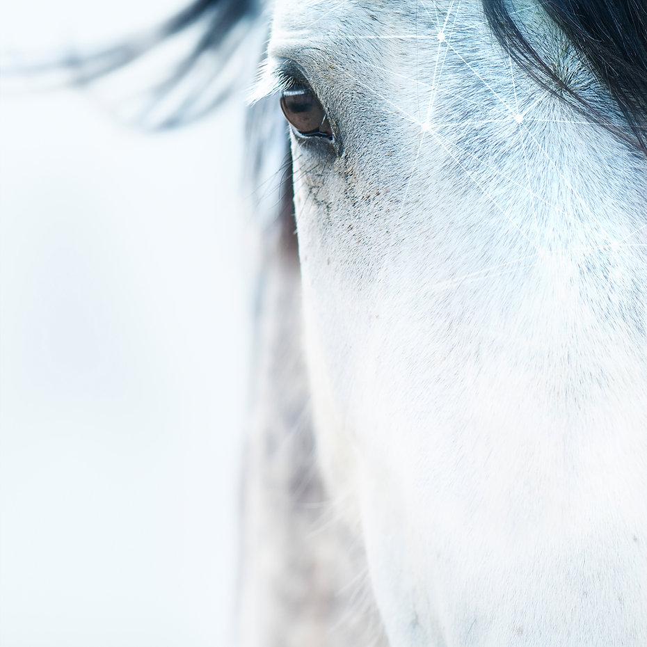 Paard tech 01 - RGB.jpg