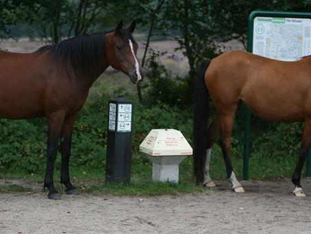 Paarden Hebben een Ingebouwde GPS