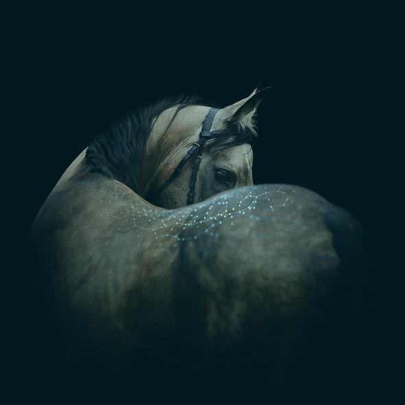 Paard tech 02 - RGB.jpg
