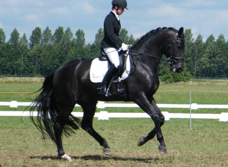 The Five-Minute Canter Rule in Training