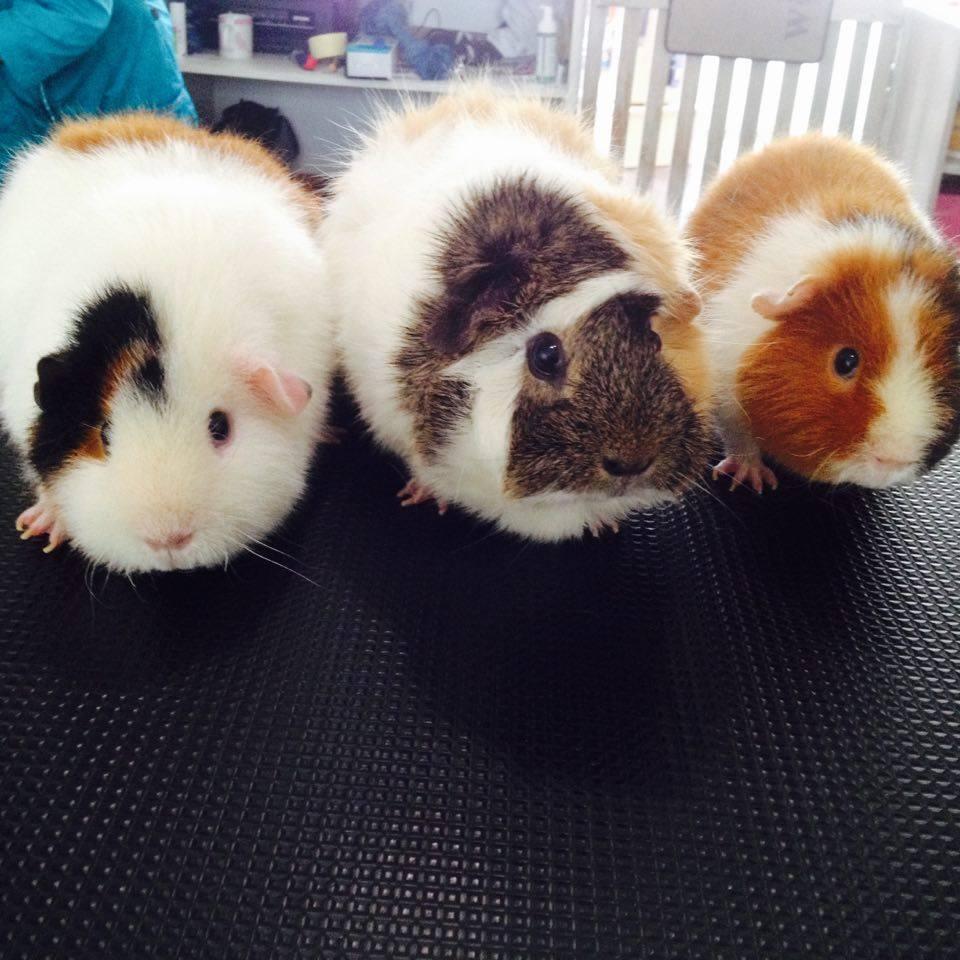Smouthie, Granola et Grenouille
