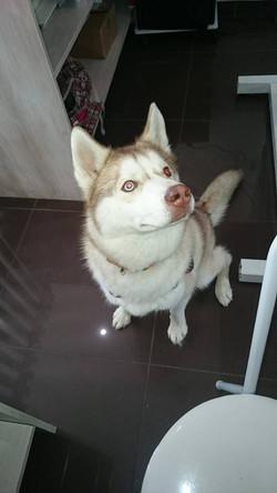 Kamaji, Husky