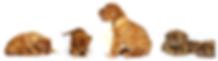 Plusieurs bébé dogue de bordeux