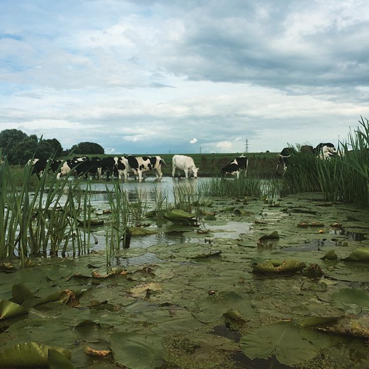 Countryside of Denmark