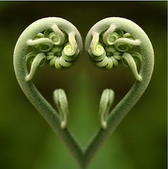 PlantLoveHeart.png