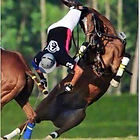 Polo protective gear matters