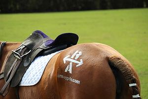 Nina saddle 2.jpg