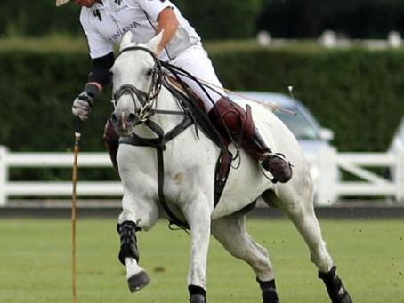 How do you get the best game out of your polo ponies?