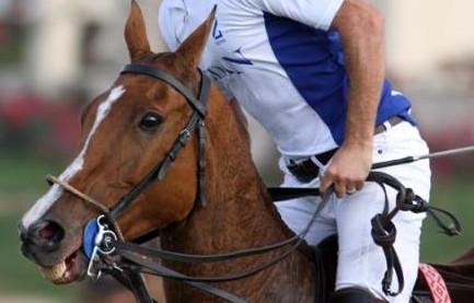 Polo reins too long
