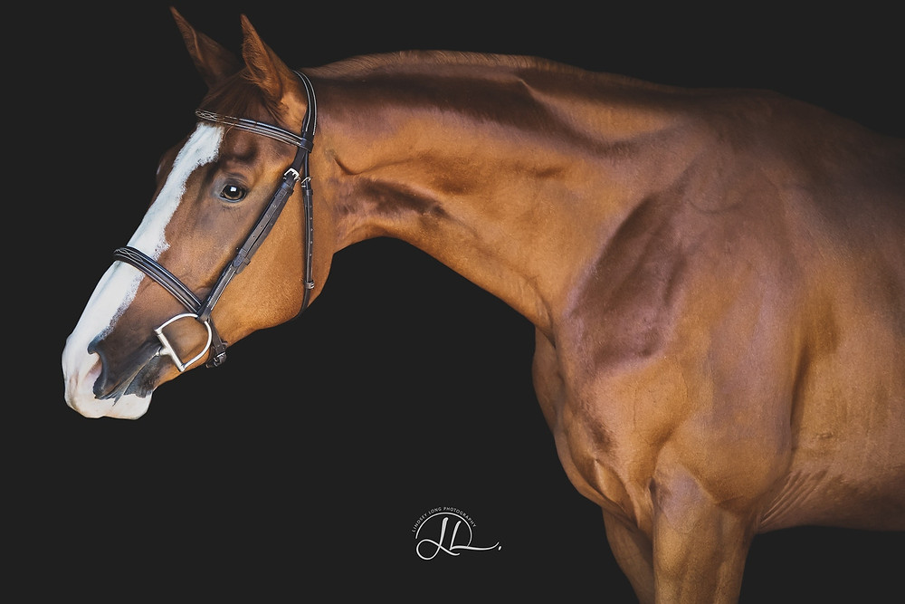 Author, Lindsey Long is a Southern California equine photographer who is totally obsessed with the beauty of the horse. Follow her @lindseylongequine on Instagram and Facebook, or check out her work at www.lindseylongphotography.com.