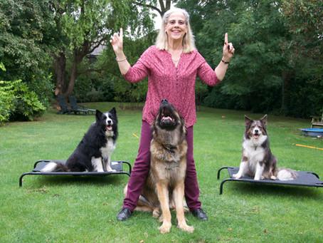 In Search of Lassie - Trailer
