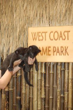West Coast Game Park Safari